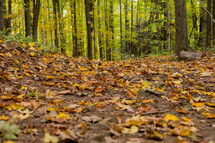 fall leaves on the ground in a forest