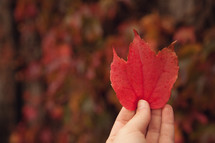 a woman holding a red fall leaf