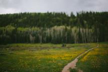 worn path through a field