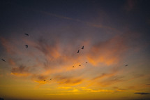 silhouettes of birds flying in the sky at sunset