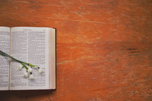 flowers on the pages of a Bible