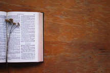 dried flowers on the pages of a Bible