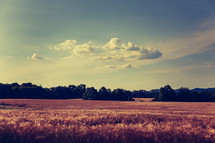 clouds over a wheat field