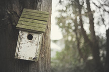 Bird house hanging on a tree.