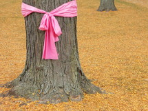 Pink ribbon tied around a tree for Breast Cancer Awareness campaign on a women's college campus.