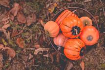 orange pumpkins in a rusty pail