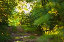 a dirt road through a forest