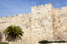 Jerusalem City walls with palm tree
