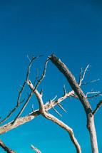 driftwood against a blue sky