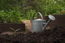 watering can and sprout in a garden bed
