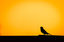 silhouette of a song bird at sunset