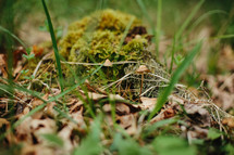 moss and grass on a forest floor