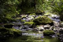 a stream in a jungle