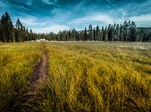 worn path through a field of tall grasses