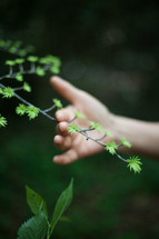 hand on a twig with new growth
