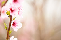 Stem of pink flowers.