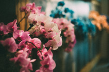 blue and pink orchids in botanical gardens
