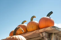 Pumpkins on a table with blue sky
