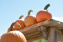 A table of Pumpkins with blue sky