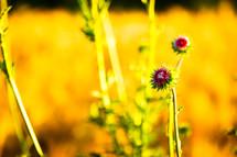 wildflowers in a wheat field