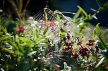 spider web in a garden