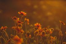 wildflowers and sunlight