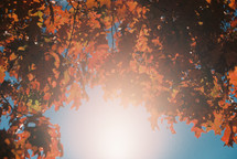 intense sunlight and red fall foliage