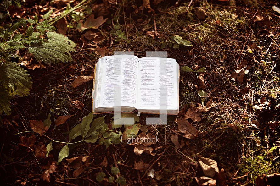 a Bible on a forest floor