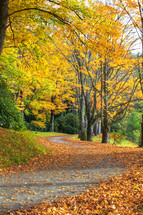 road and colorful fall trees
