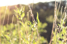 leaves and tall grasses under sunlight