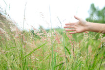 Hand reaching across tall grass in a field.