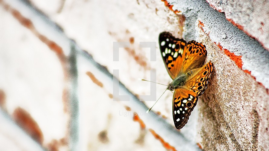 butterfly on a brick wall