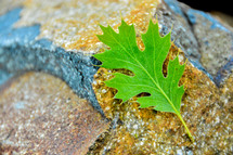 green leaf on a rock