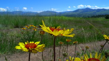 red and yellow flowers in front of a field and mountain backdrop