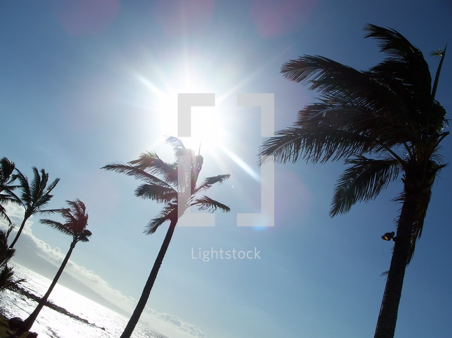 palm trees in the sunlight