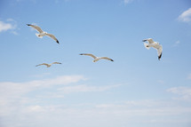 seagulls flying in a blue sky.