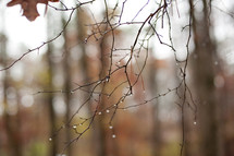 Barren tree branch dripping with water