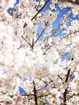 white flower blossoms