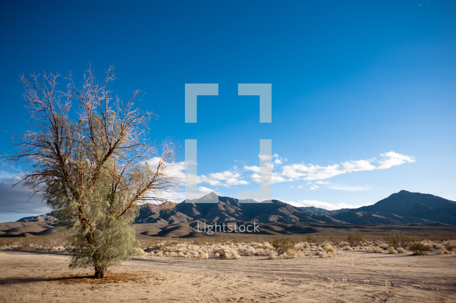 Desert tree, barren, lonely, mountains