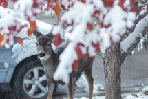 a little deer outside our window on a snowy day