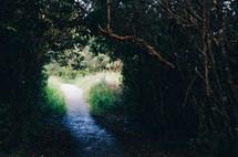 path through a jungle