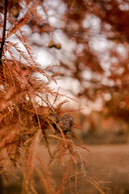 dry pine branches