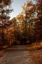 paved path and autumn forest