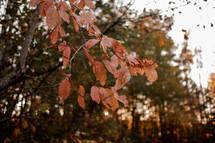 orange fall foliage