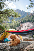 campsite with a tent, hammock, and golden retriever