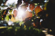 sunlight on green and brown leaves