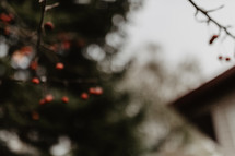out of focus house and branches with berries