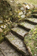 moss growing on stone steps outdoors