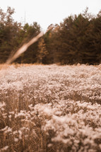 brown vegetation in a field