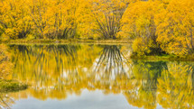 reflection of yellow fall leaves on lake water
